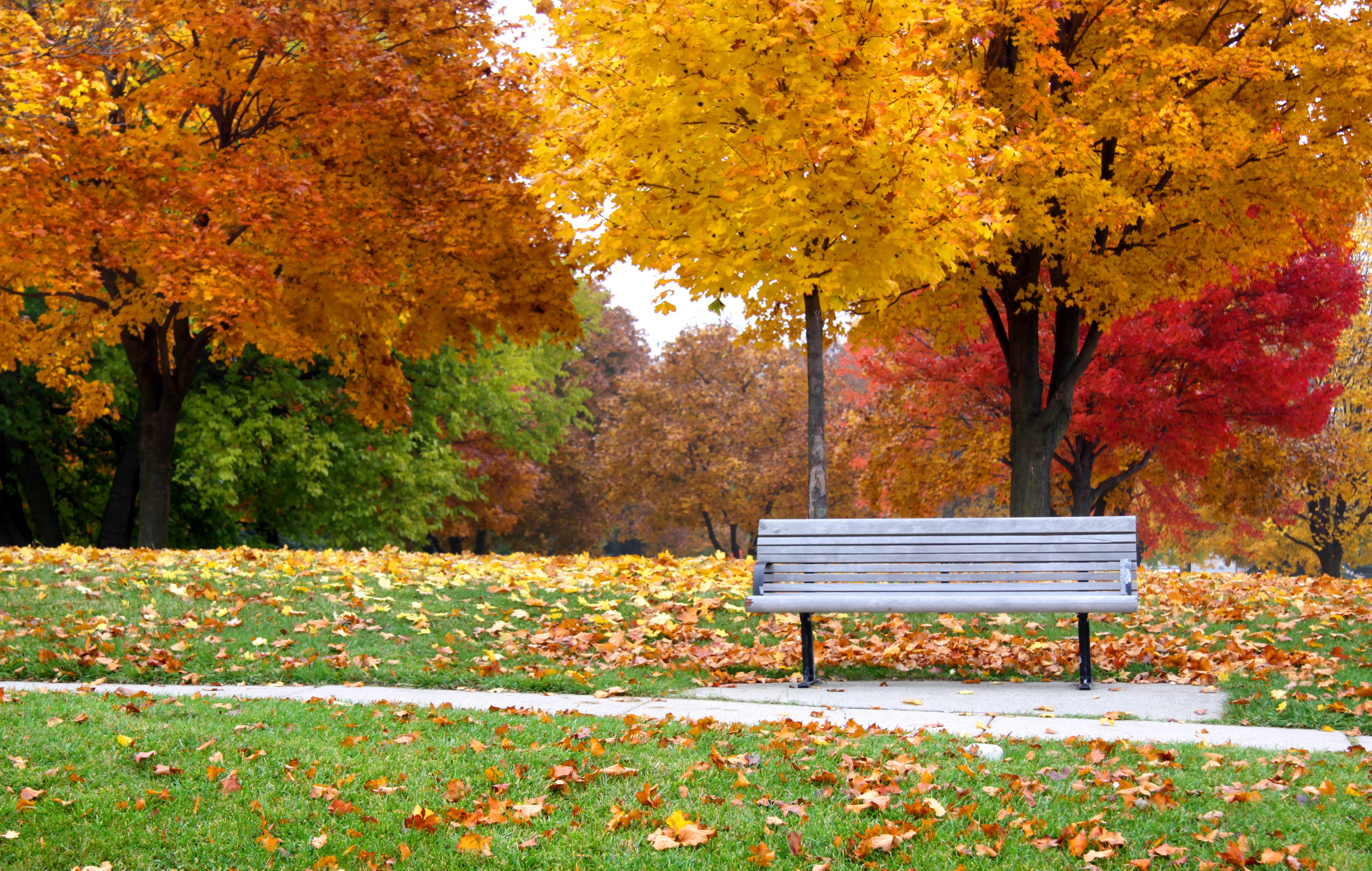 single park bench among trees in full fall foilage
